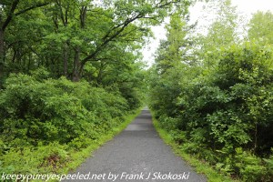 lush green wooded trail