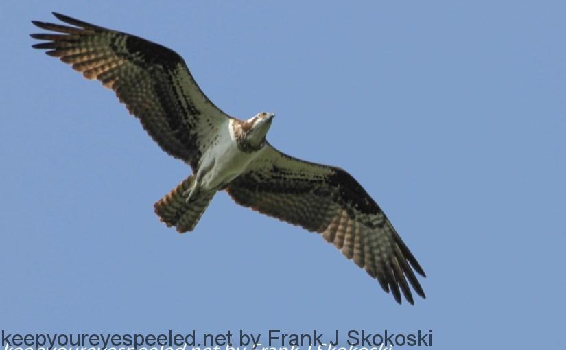 PPL-Wetlands-birds-23-of-26