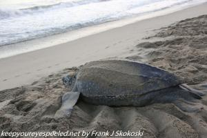 Turtle in sand on beach