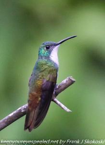 humming bird on perch