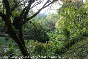 trees in rainforest