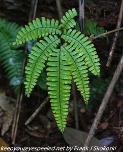 fern on trail