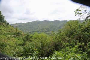 rainforest and mountains