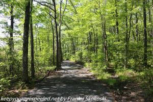 tree lined trail