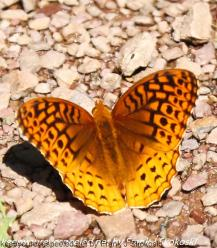 butterfly on trail