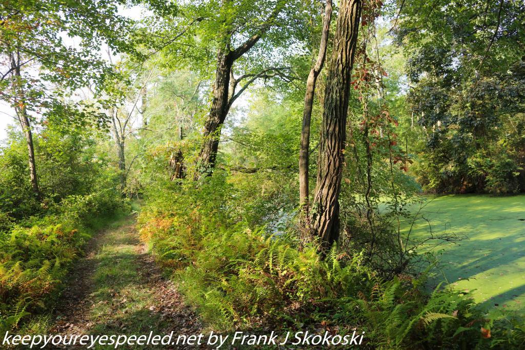 wetlands (1 of 39)