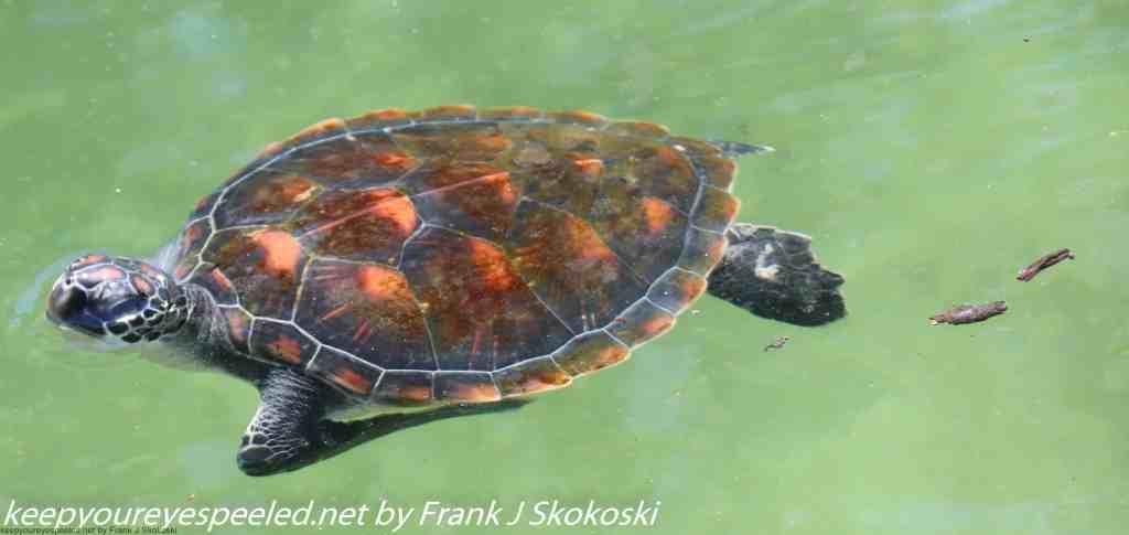 Tanzania Day Five zanzibar turtle preserve (9 of 27)