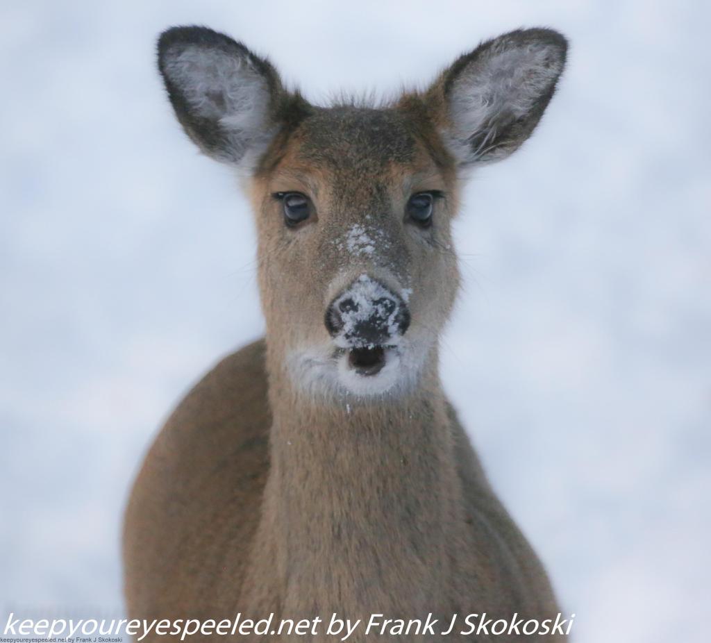 deer (5 of 5)
