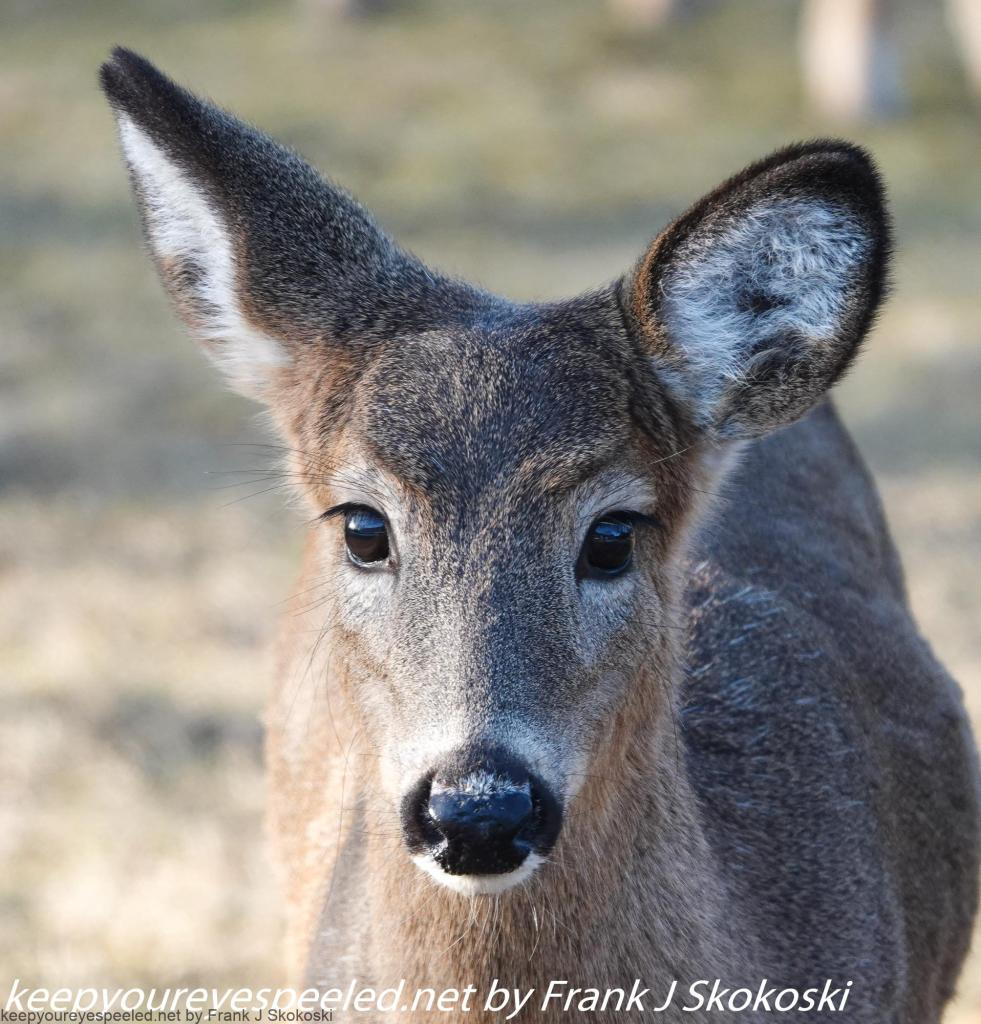 deer (4 of 7)