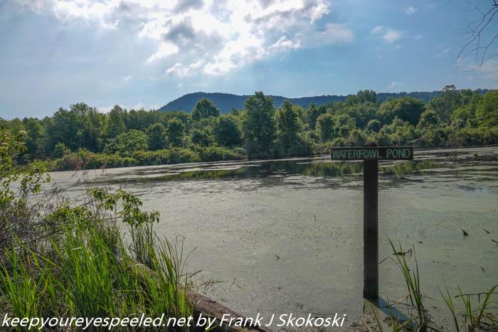 Susquehanna wetlands (13 of 47)