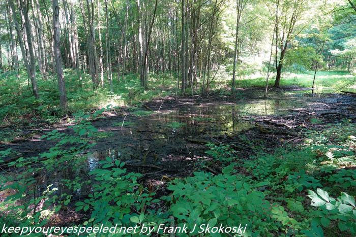 Susquehanna wetlandfs (17 of 45)