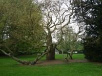 De Lutte, Arboretum Poort Bulten, 2013