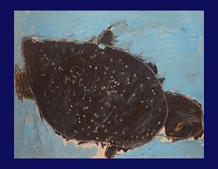 shark35