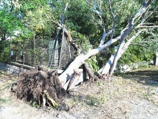 台風で盛りあげられた土