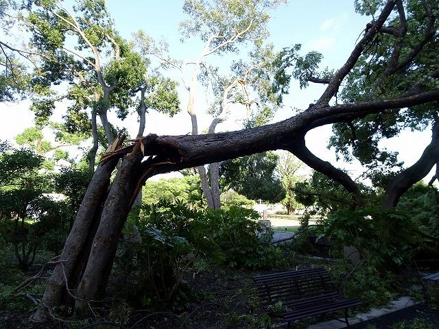 台風で折れる木