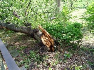 台風で木々がなぎ倒される