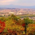 京都嵐山モンキーパークの猿