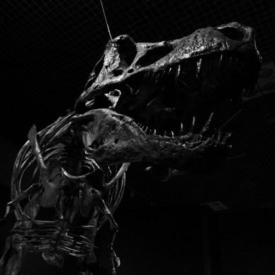 ブロガーと恐竜の絶滅