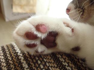 貓掌相:從肉球看貓咪的個性 | SLOW JOURNEY