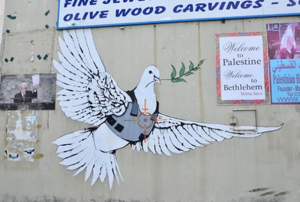 狙われた平和の象徴、鳩。
