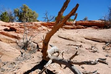 2012-FIM-Moab 2012 Flat Iron Mesa – 05