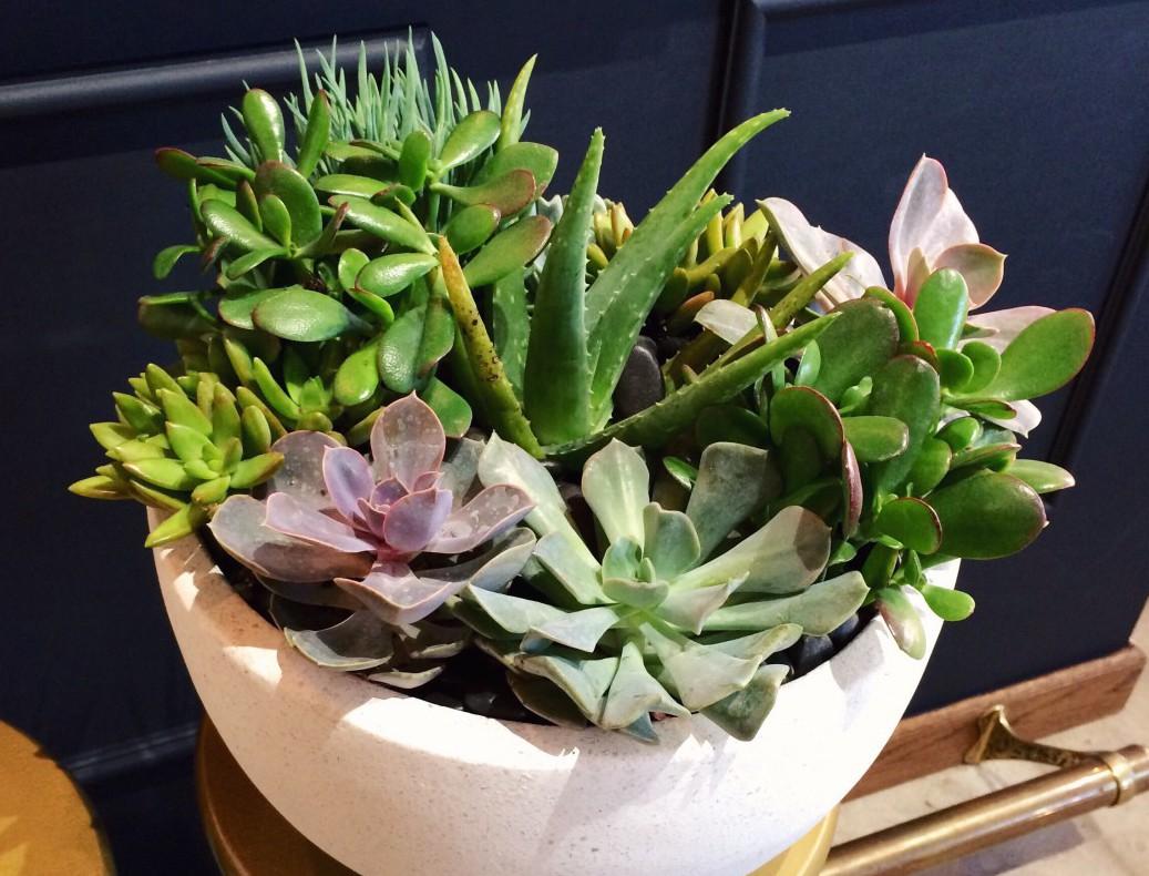 DIY Potted Succulent Garden In West Elm Planter. keiralennox.com