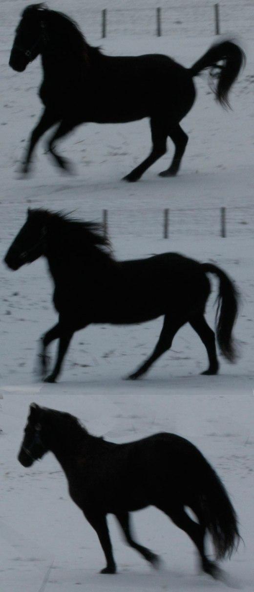 Tara-free-lunge-Dec-31