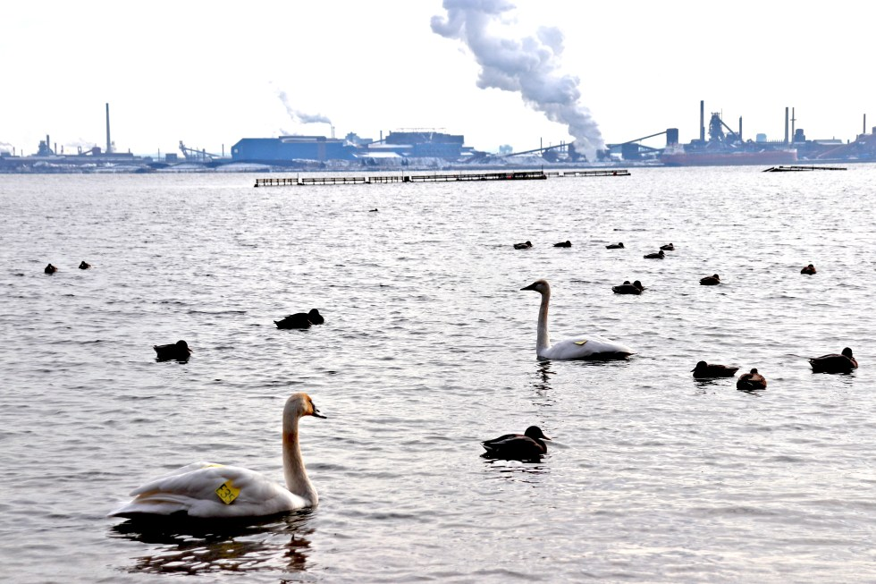 Swans_Factory