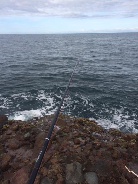 鳥取カゴ釣り