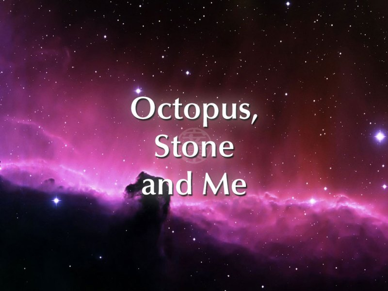 Octopus, Stone and Me