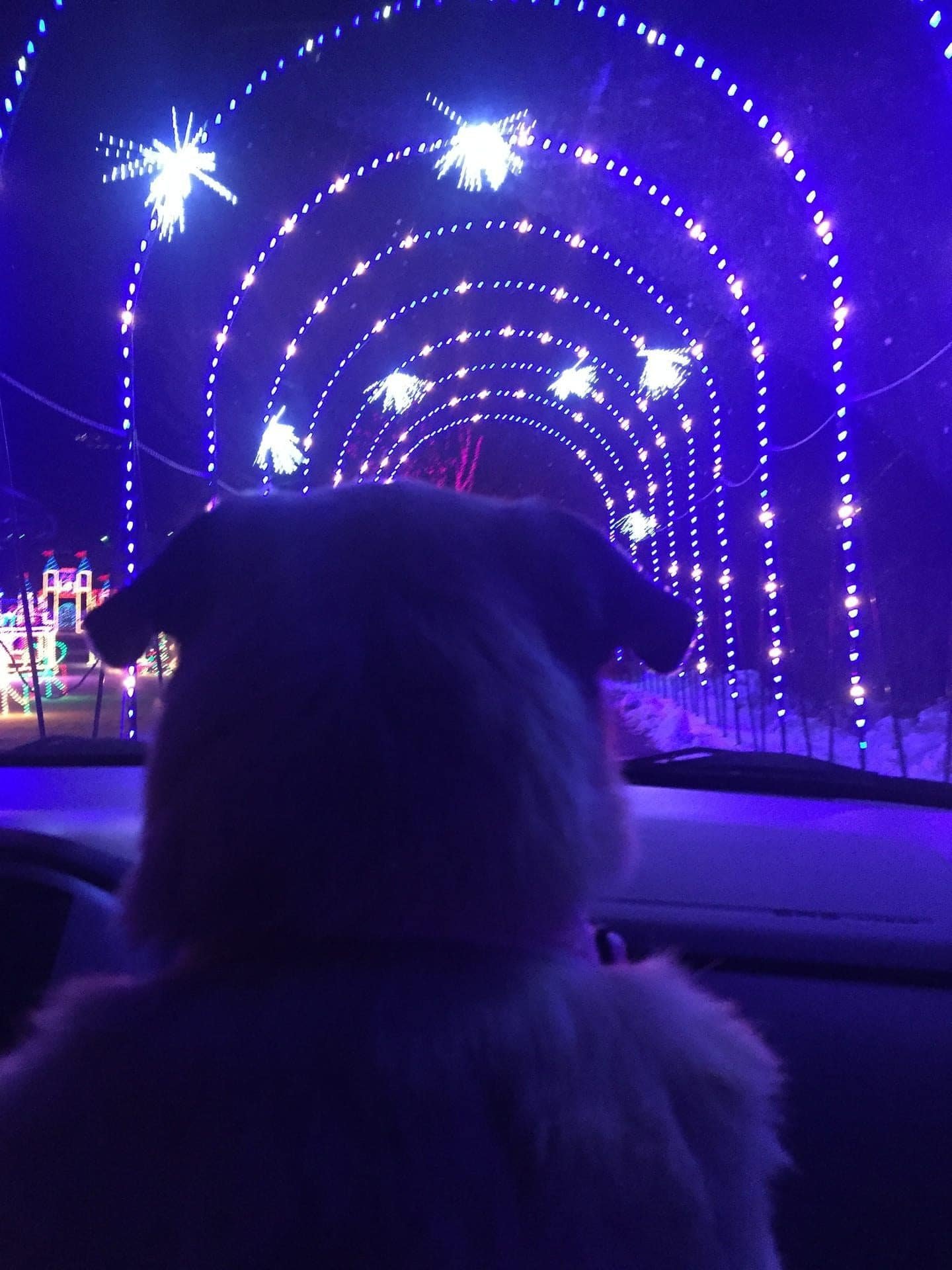 Lexi loved the lights!