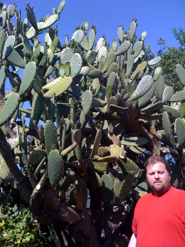 cacti.andy