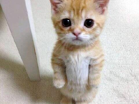 https://i0.wp.com/keithlovesmovies.com/wp-content/uploads/2015/07/sad-cat.jpg?resize=480%2C360&ssl=1