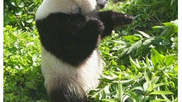 https://i0.wp.com/keithlovesmovies.com/wp-content/uploads/2016/01/kung-fu-panda_o_688713.jpg?resize=640%2C360&ssl=1
