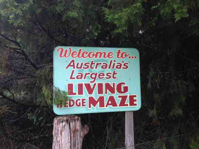 A photograph taken of a sign advertising Australia's largest living hedge maze in Bright, Victoria.