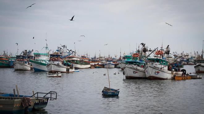 Squid boats anchored in Paita, a port city in northern Peru. Humboldt squid support a massive artisanal fishery in this region.