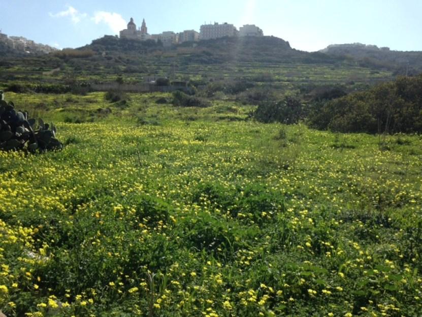 malta-fields