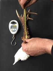 Keith measuring