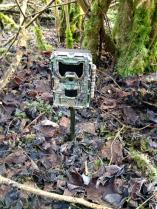 Trail Cam in the field 3