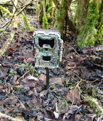 Trail Cam on Spike