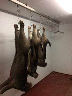 Finished chiller, deer hanging