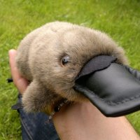 Keith's Australian Adventures 1: The Story of the Platypus