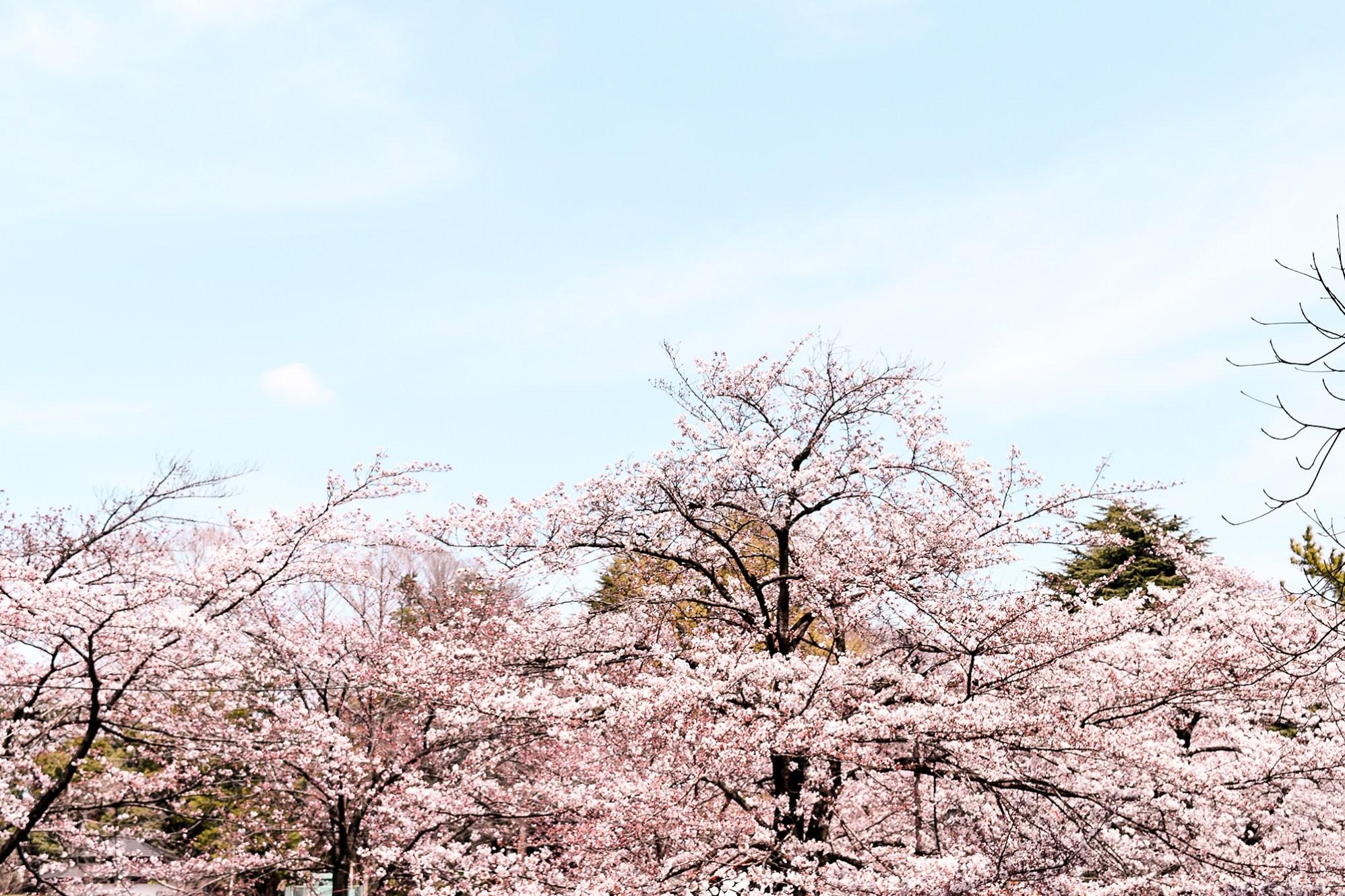 The view that greeted us at Omiya Park in Saitama