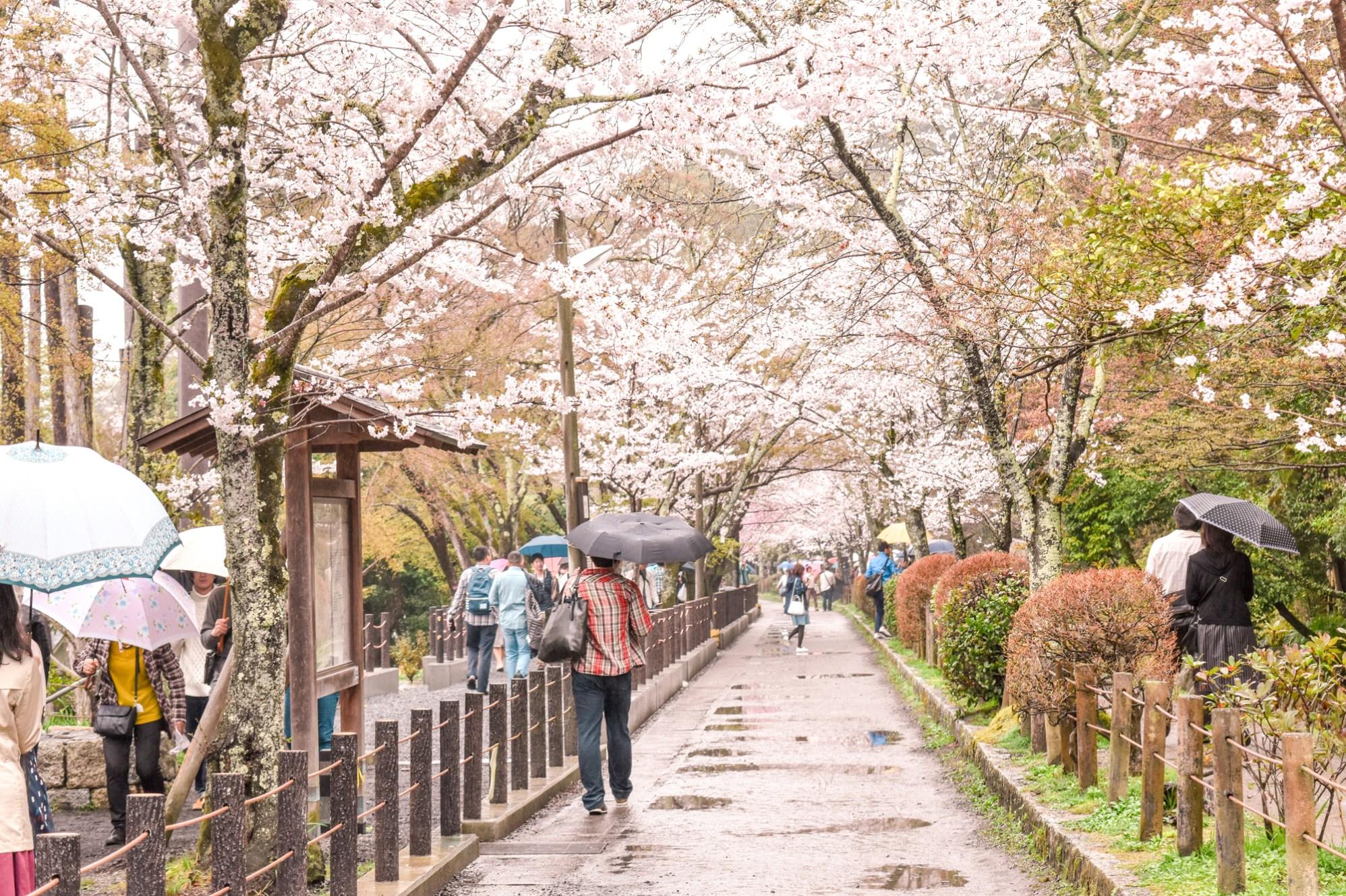 Philosopher's Path, Kyoto