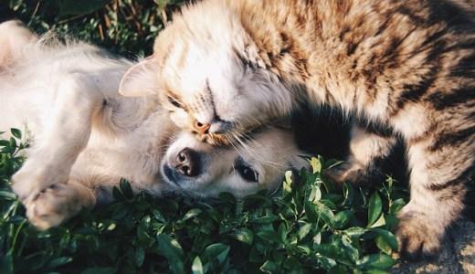 犬や猫に噛まれたときの対処法、病院では何科に行くべきか?