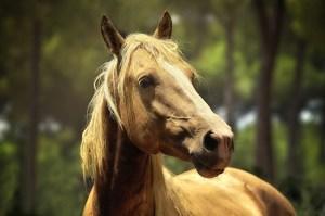 Keizer-Feerwerd Paarden