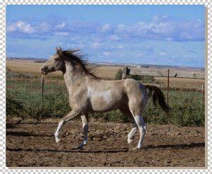 lukisan kuda 4