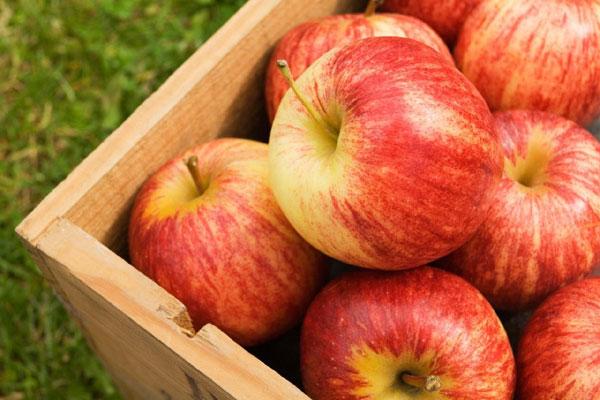 apple_pomme_gala_delivery_lebanon