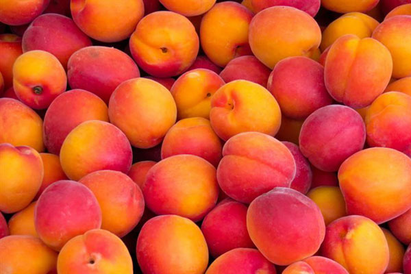 apricot_red_abricot_delivery_lebanon