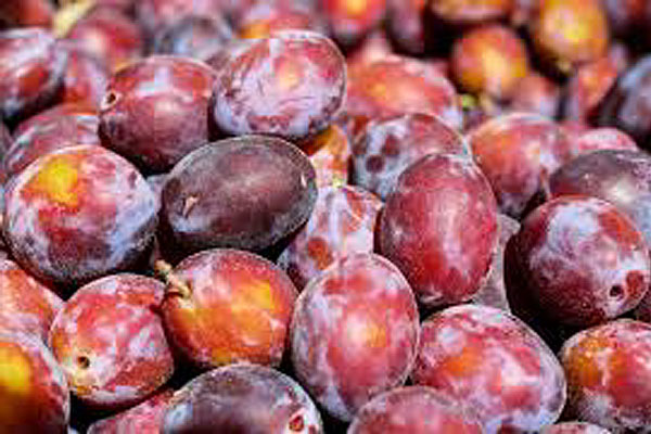 prune_longue_rouge_red_plum_delivery_lebanon